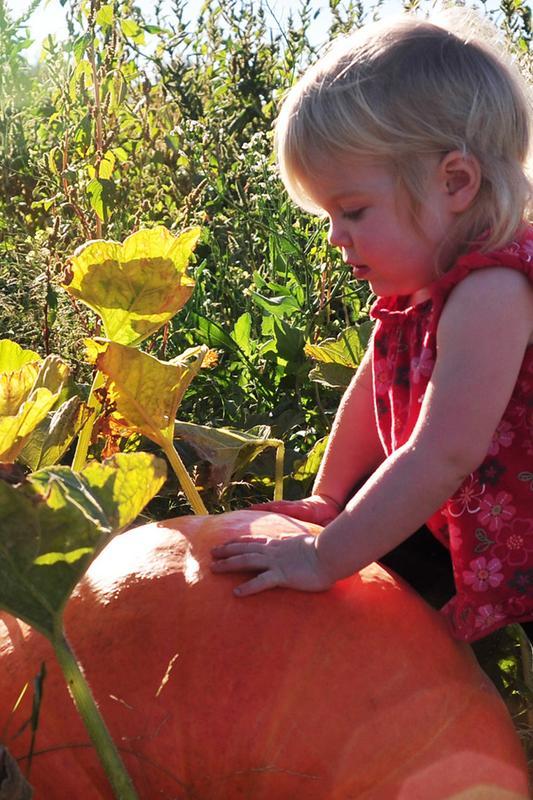 Weekday Pumpkin Pass 2015