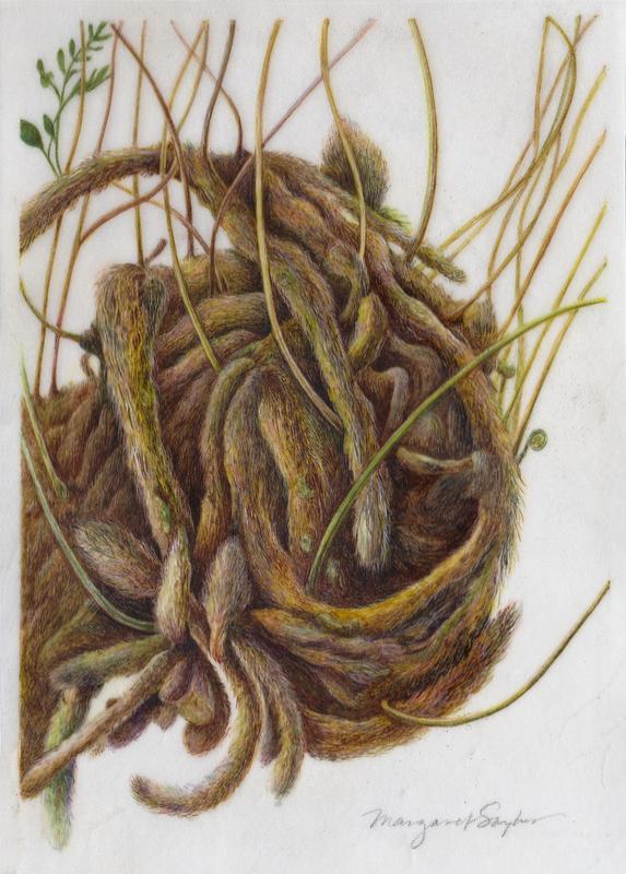 Botanical Illustration: Session A