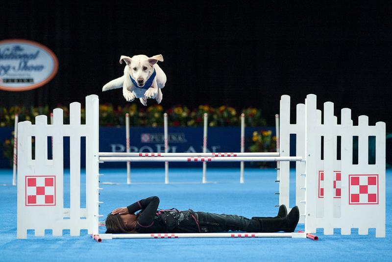 2015 National Dog Show Presented by Purina
