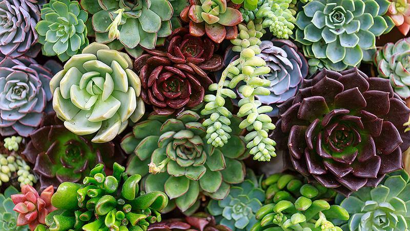 We Love Succulents