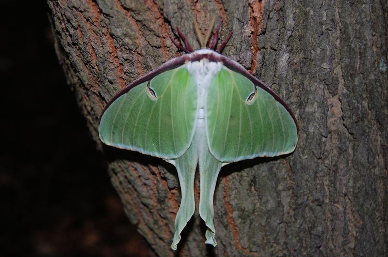 A Little Moth Magic