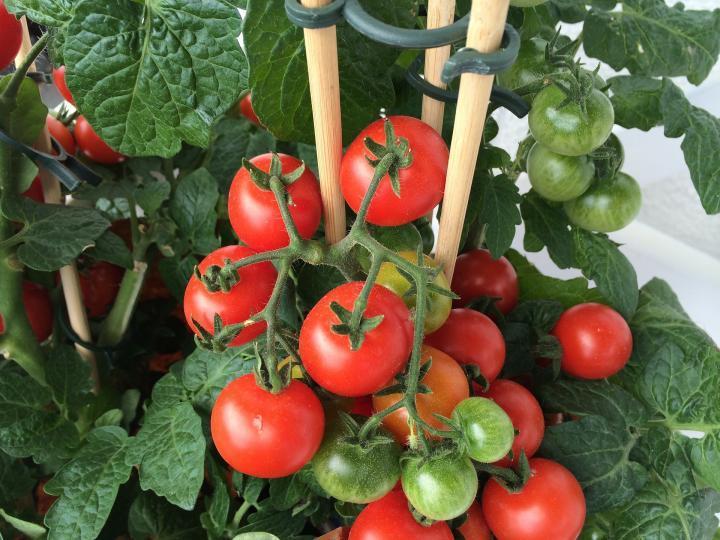 Container Veggie Gardening for Kids