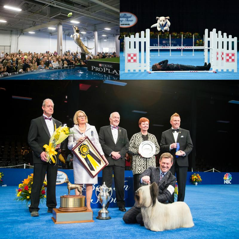 2016 National Dog Show Presented by Purina
