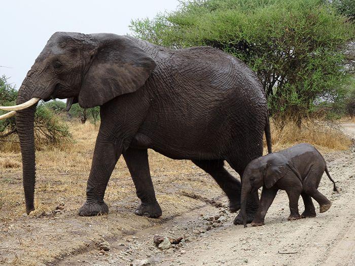 Serengeti Safari Reis