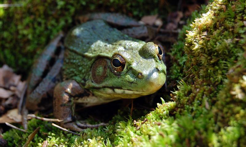 Feed the Animals: Amphibians