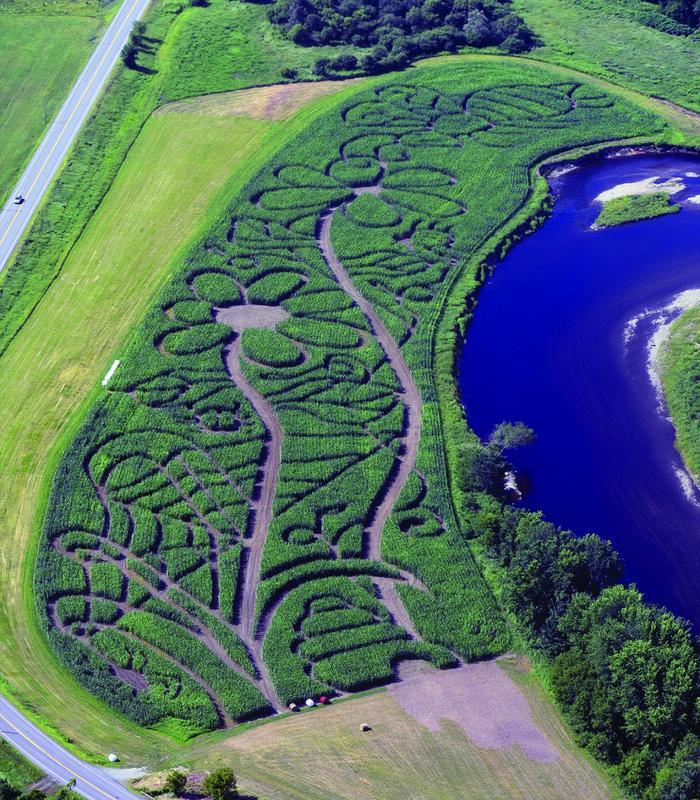 Collins Farm Corn Maze FLASHLIGHT Maze