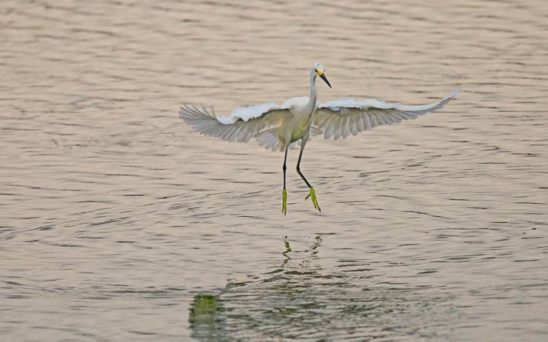 Running Tour of Mitchell Lake Audubon Center