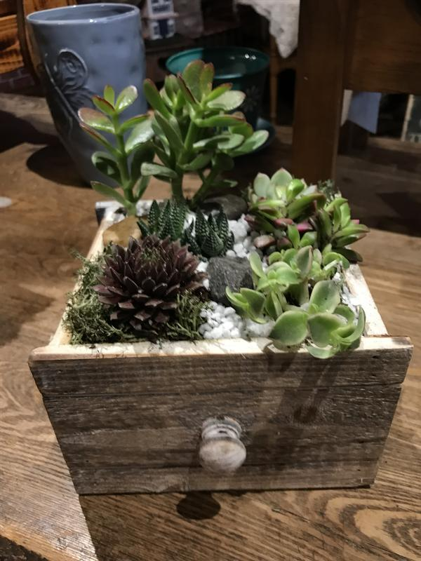 After hours design succulent take 2