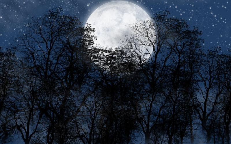 Full Moon Forest Therapy