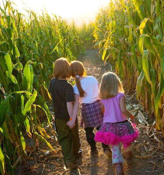 Pumpkin Hollow Corn Maze Family Farm & Fall Festival 2014 Tickets