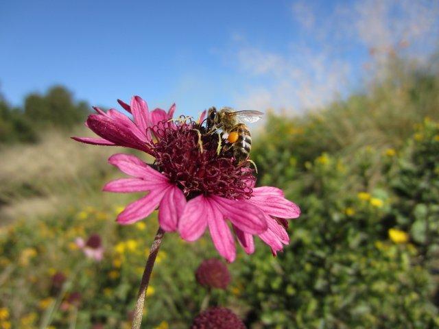 CLASS: Pollinator Celebration