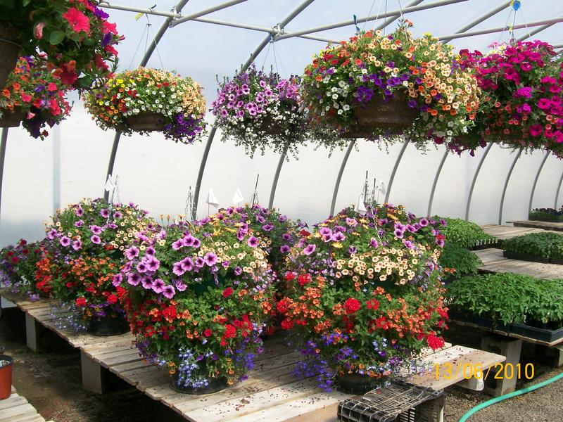 2019 Build A Hanging Basket Workshop