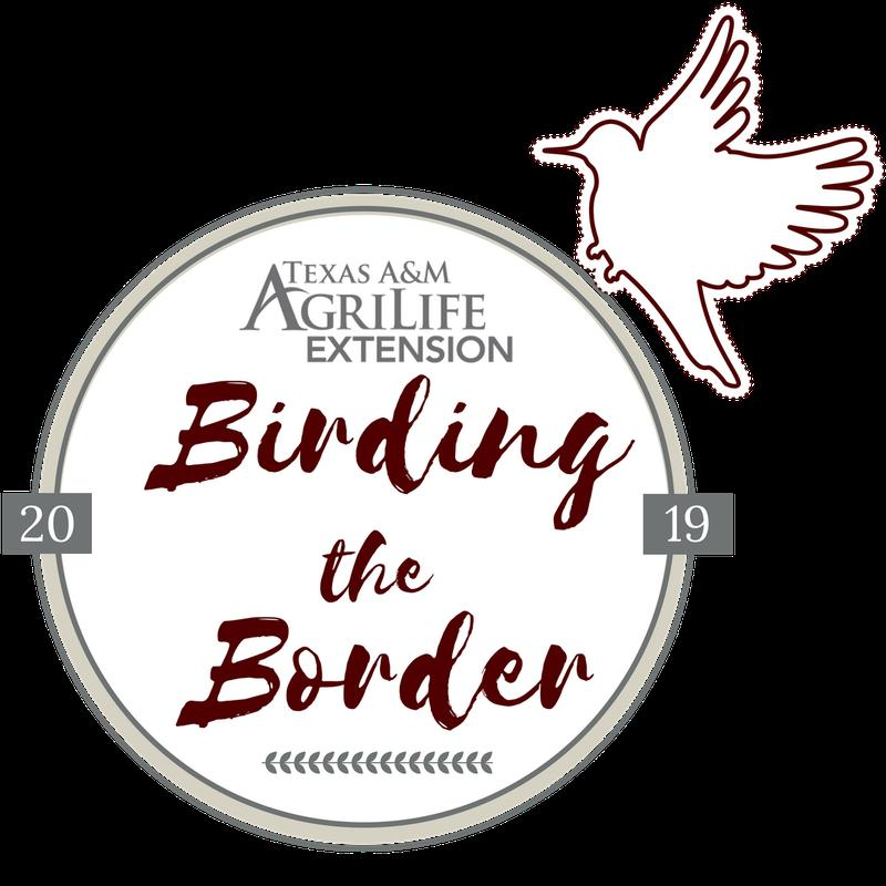 Birding the Border 2019
