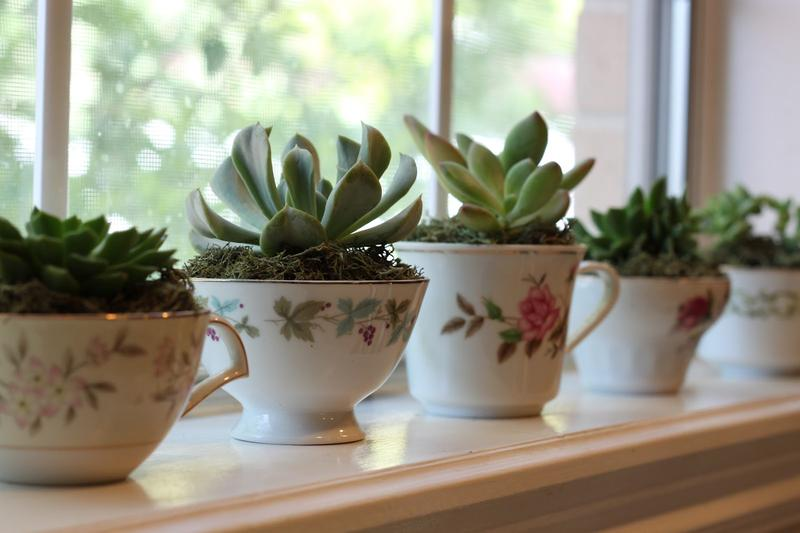WCBD Presents: A Succulent Evening with Industry Professionals
