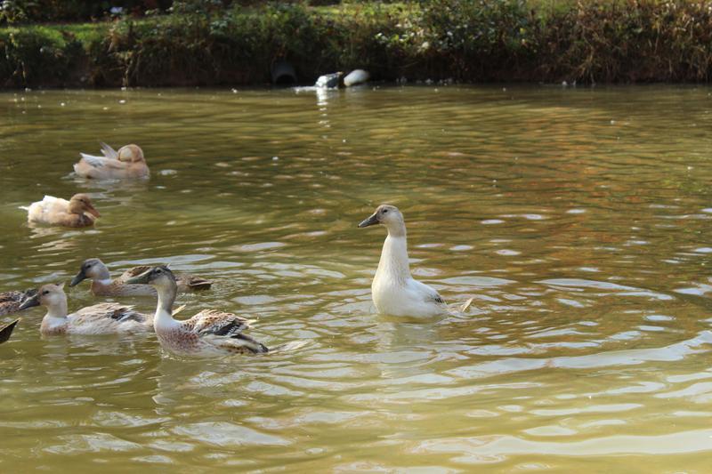 Ducks 101 (February 24)