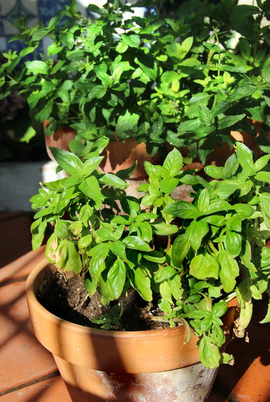 Adult Cooking Class: Culinary Herb Gardening at Home