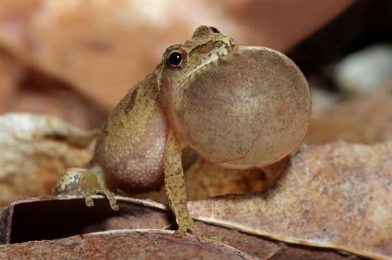 Twilight Frog Walk