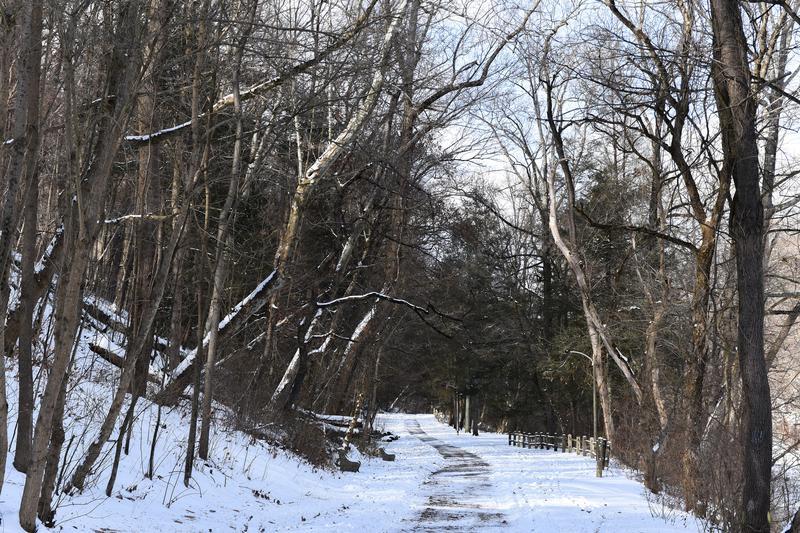 VOLUNTEER in Cobbs Creek Park