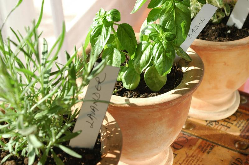 Plant and Take: Herb Pot