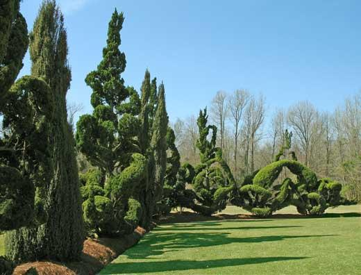 CLASS: The Art of Topiary by Pearl Fryar
