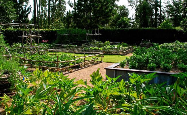 FAMILY PROGRAM: A Day in the Veggie Patch