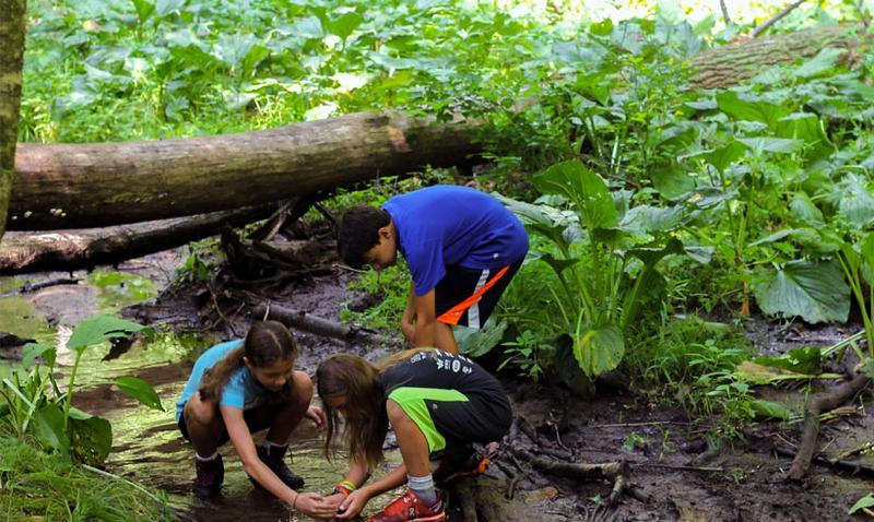 Summer Saturday Adventures: Bailey Brook Stream Stomp