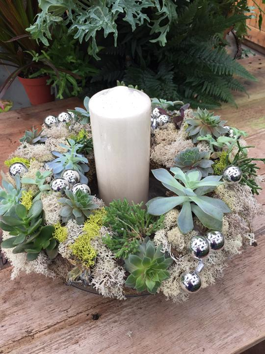 Holiday Succulent Centerpieces