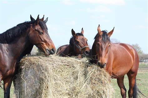 Dinner & Learn: Equine Nutrition - Hay 101