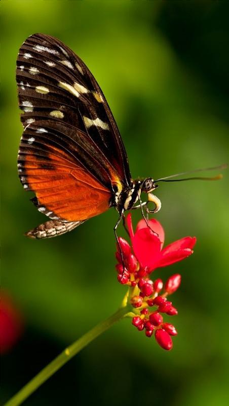 Kids Discover: Butterflies & Moths