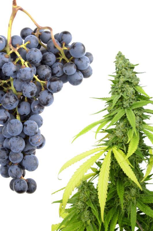 Seminar: Weed and Wine