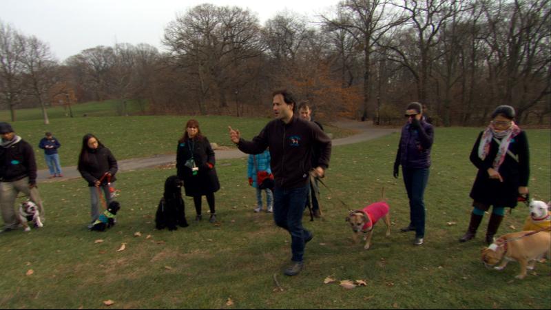ZOOM Offleash / dog park