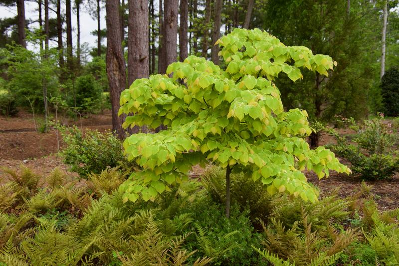 CLASS: Small Trees for the Home Landscape
