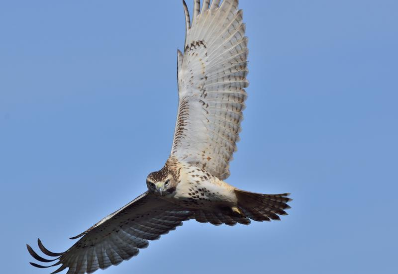 Educator Workshop: WILD about Raptors