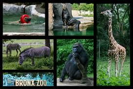 Private Bronx Zoo Tour Meetup