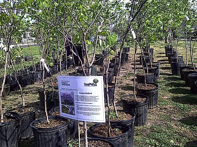 EKNA + NKCDC Free Yard Tree Giveaway
