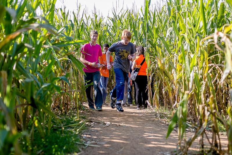 Lyon Family Farms Fall Festival
