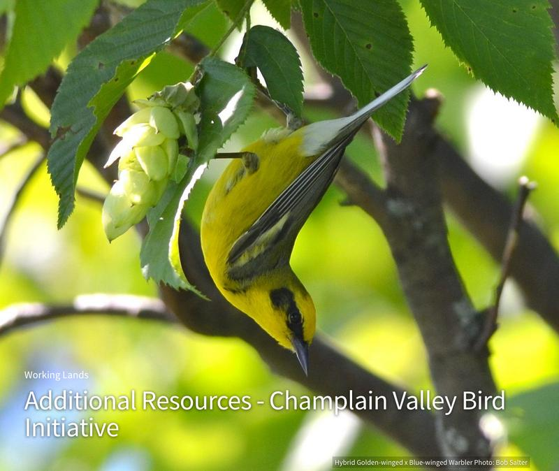 The Vermont Audubon Center Will Come To The Garden Center To Present  Beautiful Birds. Fall Is The Perfect Time To Learn About Birds.