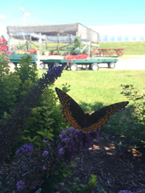 June - Farm to Table Dinner