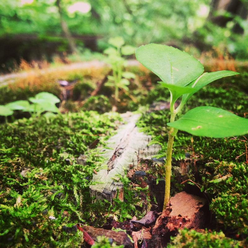 Guided Hike & Meditation