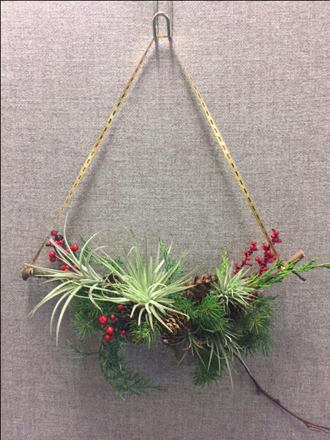 Abstract Airplant Wreaths
