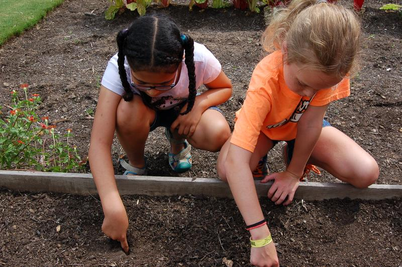 Young Naturalists Summer Day Camp