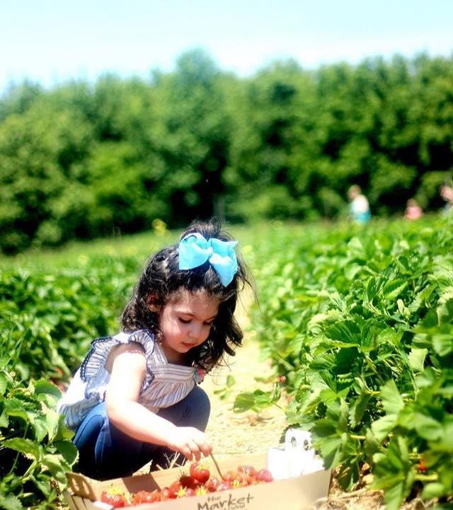 Strawberry Fun Days