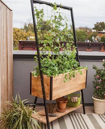 How to Grow More in Less Space