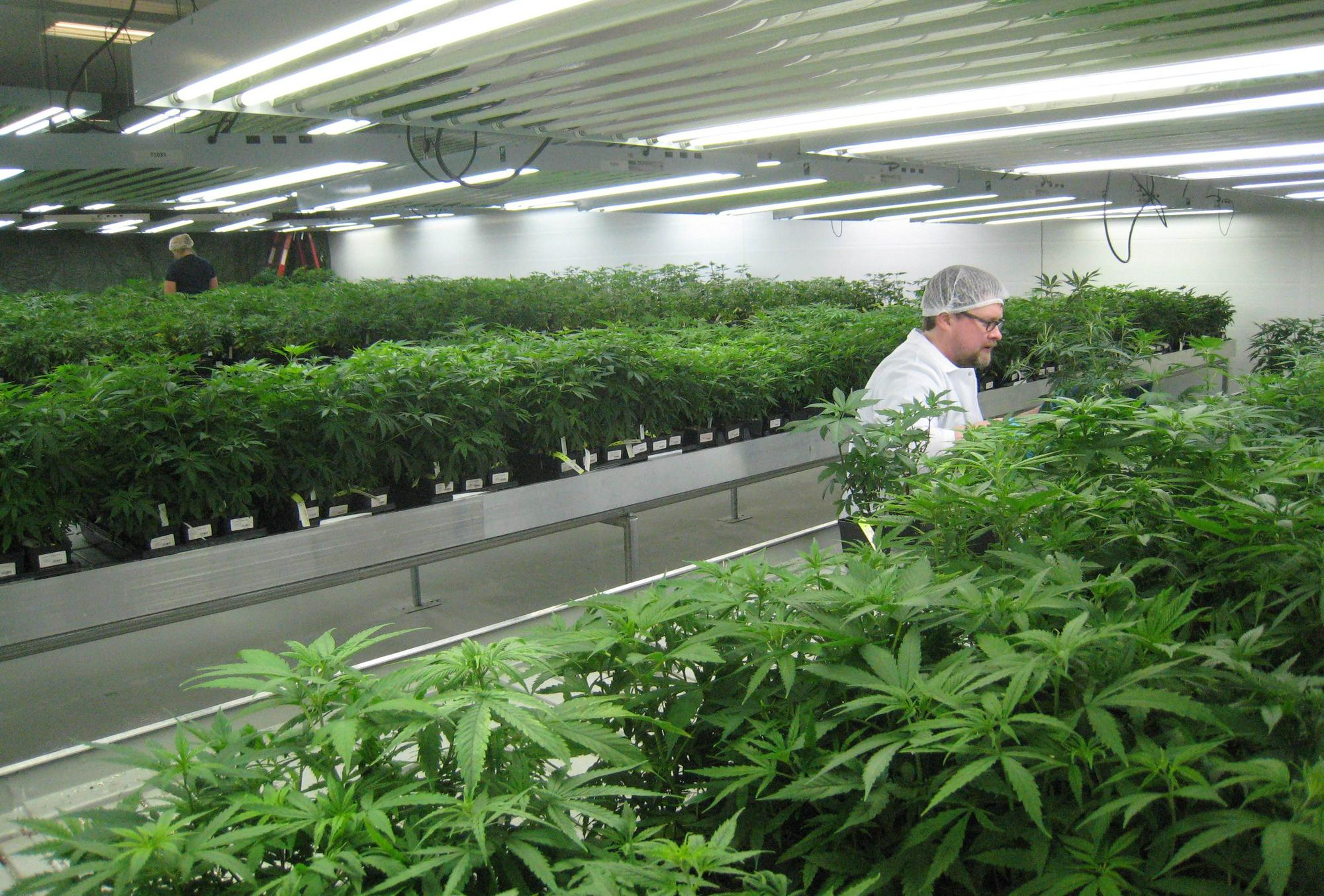 Commercial Grow Room Design Tickets in Tampa FL United States