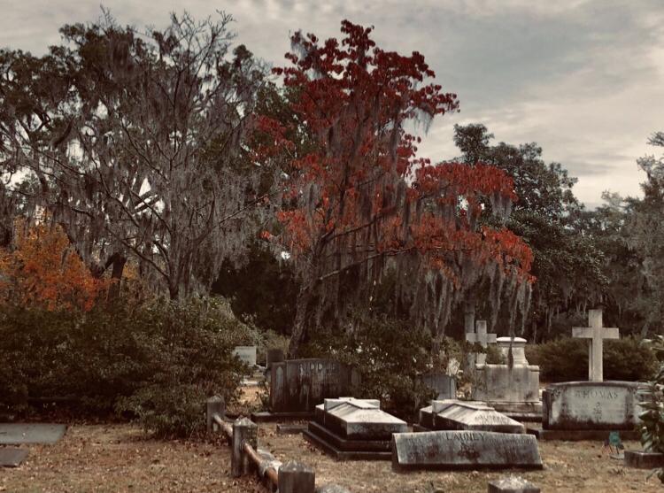 The Haunted Savannah Paracon