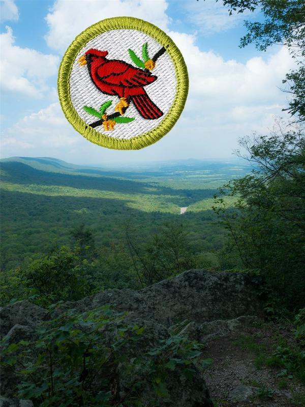 Boy Scout Day: Bird Study Merit Badge
