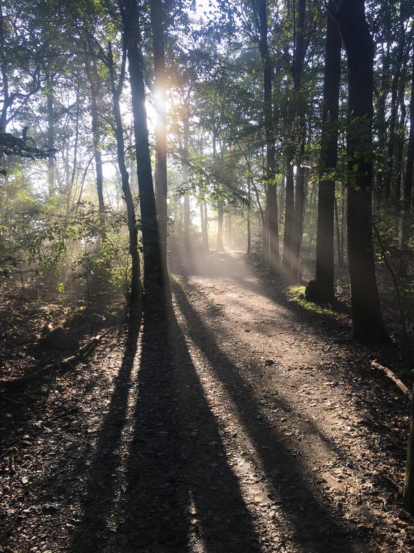 Overnight Hammock Camping Experience