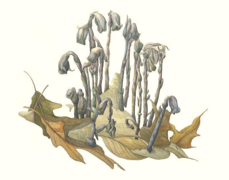 Botanical Art : Guided Studio