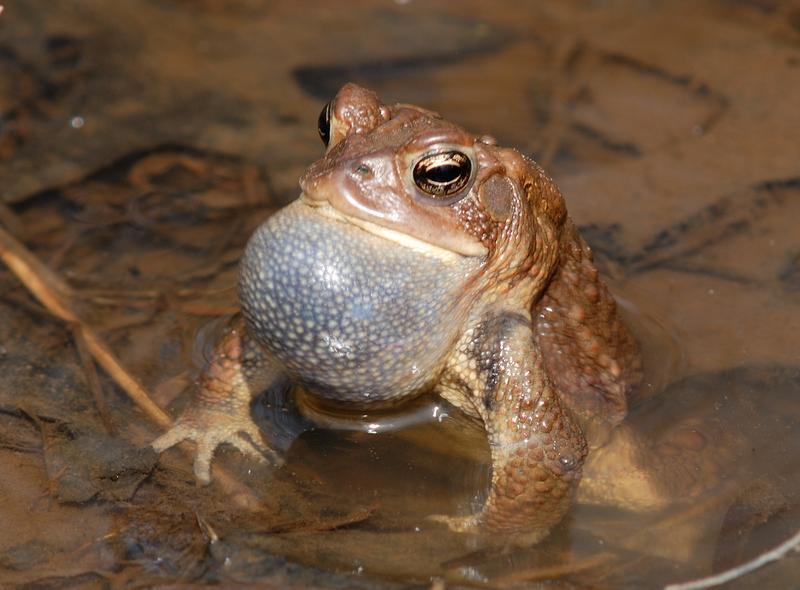 Family Fun in Nature - Amazing Amphibians