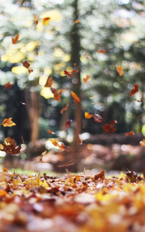 Fall Foliage Photography Hike